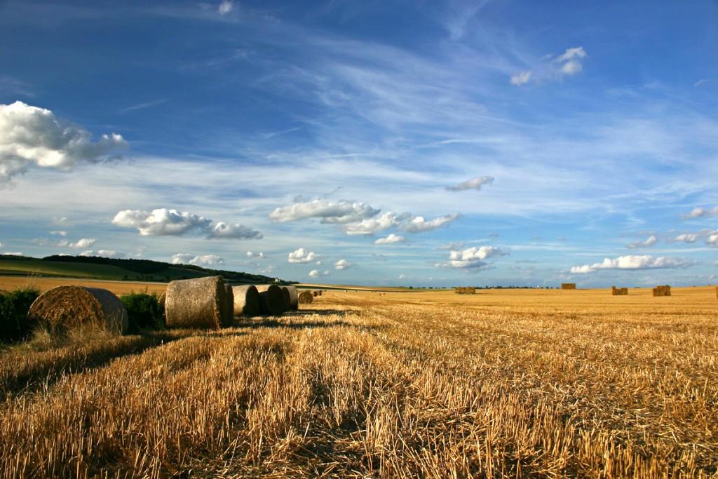 Ilustracne k polnohospodarstvu harvest-2-1405391