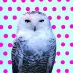 Wilson_Owl_PantMag_02